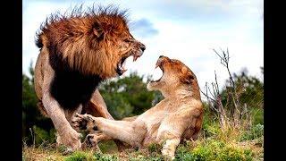 Жестокие бои животных