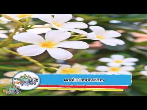 ครอบครัวข่าวเด็ก ช่วงASEAN Weekly ตอน ดอกไม้ประจำชาติลาว (24 ก.ค.57)