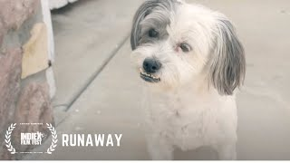 Adorable Short | Lilly, a Maltipoo, Decides to Runaway From Home