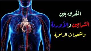 الأوعية الدموية الجهاز الدوري٣ Youtube