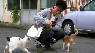 街を歩けば猫に当たる!? 写真家・ハーシー鴨乃の諸国漫遊、 街角・路...
