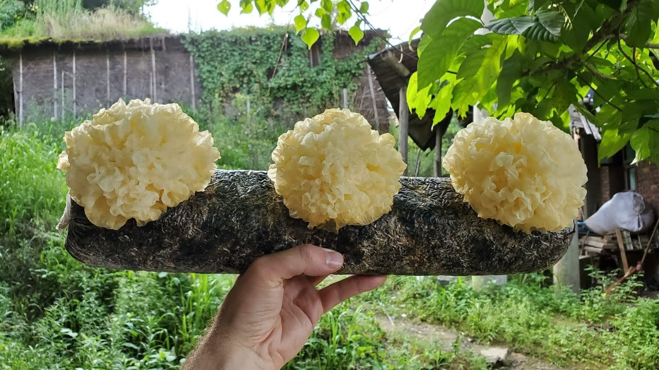 These 25 Types Of Mushrooms Are Grown Around The World For Both Food and Medicine