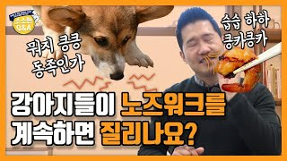 [Eng sub]Do dogs get sick and tired of nose work? |Kang Hyong Wook's Q&A