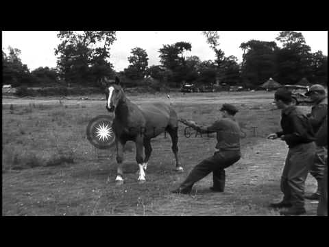 Pilot of U.S. Army Air Forces 354th Fighter Group, lassos, and rides a horse, bar...HD Stock Footage