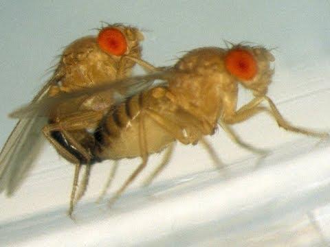 Вопрос: Почему мошки размножаются быстро?