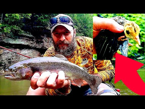 *SAVED A BABY TURKEY* TROUT FISHING||CLEAR FORK OF THE GUYANDOTTE RIVER (WYOMING CO.WEST VIRGINIA)