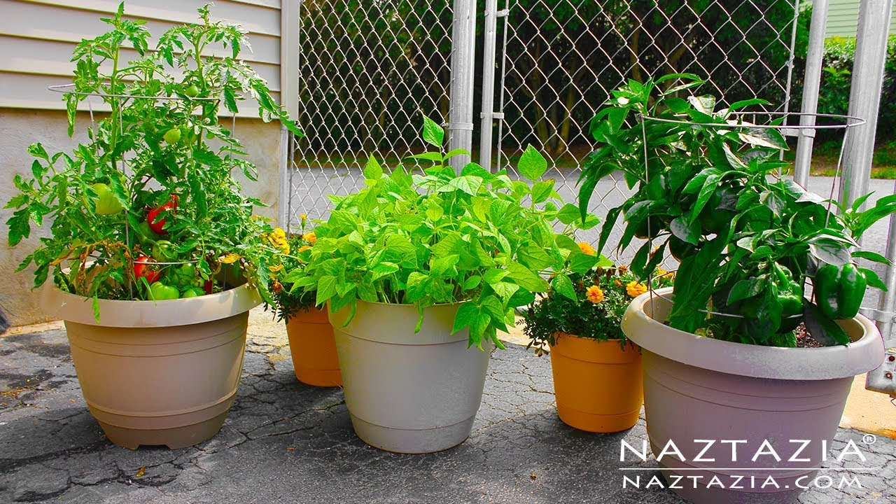 How to GARDEN for BEGINNERS - CONTAINER GARDENING on Urban Rooftop Porch  Patio Balcony
