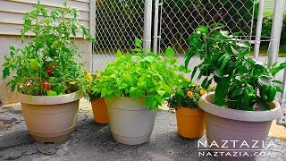 Learn How To Garden For Beginners - Container Gardening - Urban Rooftop Porch Patio Balcony