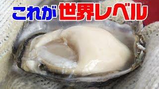 【究極の牡蠣】現場で生で食ってみた‼