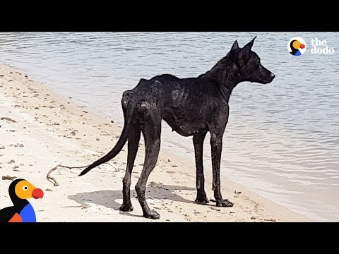 download Man On Cruise Finds Dog On Deserted Island and Rescues Her | The Dodo