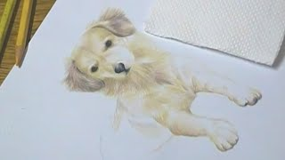 Speed Painting - Dog