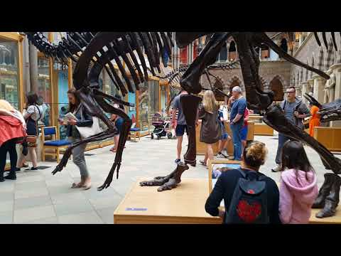 Museum Of Natural History | Oxford University | UK