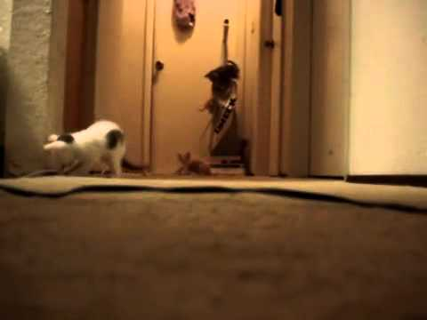 kittens-have-turn-on-a-vacuum-cleaner-(original)