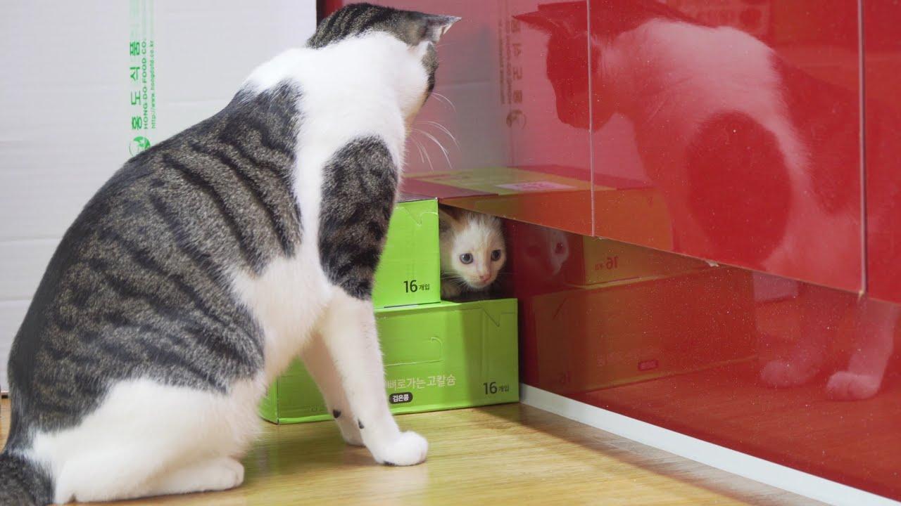 아기고양이만 다닐 수 있는 비밀 통로