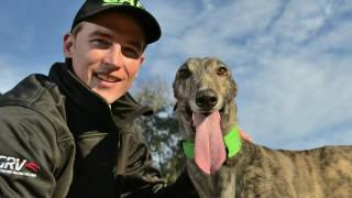 Greyhound Adoption Program highlights