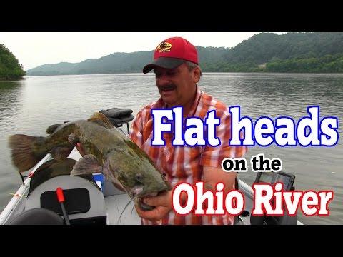 Flathead CATFISHING on the Ohio River