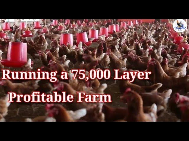 Running a 75,000 layers Profitable  Farm