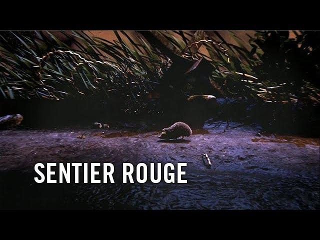 SENTIER ROUGE de Alexis COPPEE - ANIM 2017