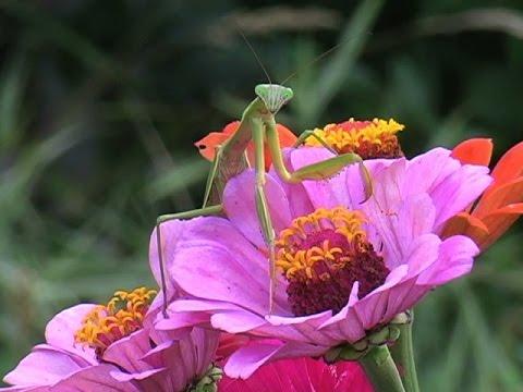 Homegrown Flower Arranging