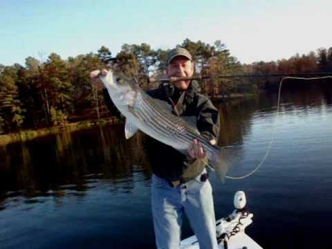 Fly fishing for lake lanier striped bass another fine day for Lake lanier fishing