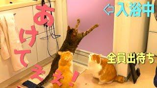 飼い主がお風呂に入ってる間待ち続ける猫達が可愛すぎたwww thumbnail