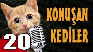 Konuşan Kediler 20 - En Komik Kedi Videoları