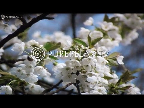 Relaxing Music - Orchestra Music, Classic Music & Nature Pictures - CLASSIC MOODS