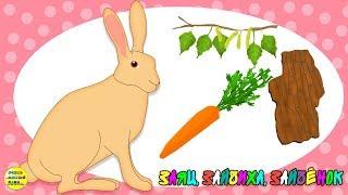 Учим диких животных:  заяц, зайчиха, зайчонок! Развивающие мультфильмы о животных