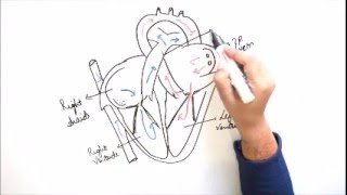 How to draw Human Heart