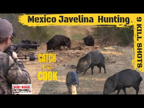 Javelina Hunting(Catch N Cook) 9 KILL SHOTS