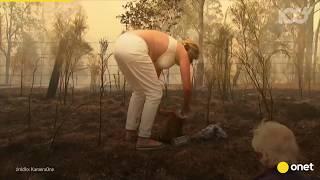 Poparzony koala krzyczy z bólu. Dramatyczna akcja ratunkowa | Onet100