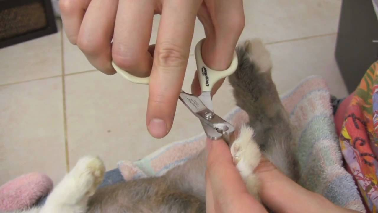 How To Trim Your Rabbit S Nails Teeny S Tips Youtube