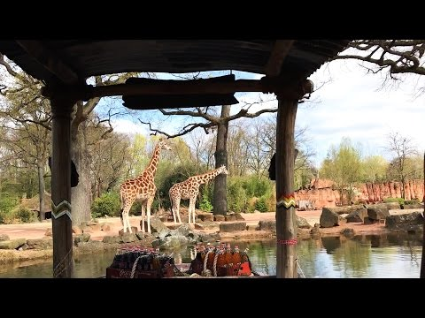 6. April 2017 Erlebnis-Zoo Hannover.