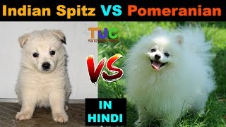 Indian Spitz vs Pomeranian : Dog VS Dog : TUC : The Ultimate Channe...