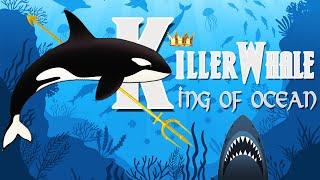 Cá voi sát thủ - Chúa tể đại dương