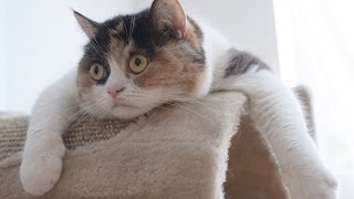 Funny Cats Compilation  Funny Cat Videos Ever Funny Videos  Funny Animals  Funny Animal Videos 3