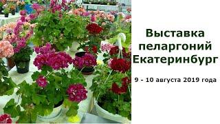 Выставка пеларгоний. Екатеринбург. 9 августа 2019 г.