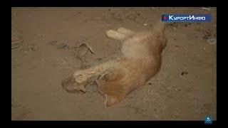 В Сестрорецке подвалы жилых домов бабушки превратили в братские кладбища бездомных кошек.