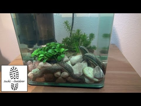 Blutegel füttern / Feed the leeches