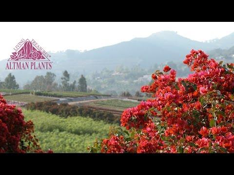 Altman Plants Vista, California Facility