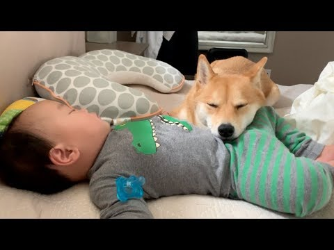 caught my dog napping on baby!