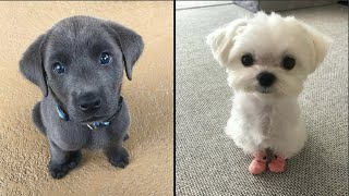 Cute baby animals Videos Compilation cutest moment of the animals 2020 - Soo Cute! #15