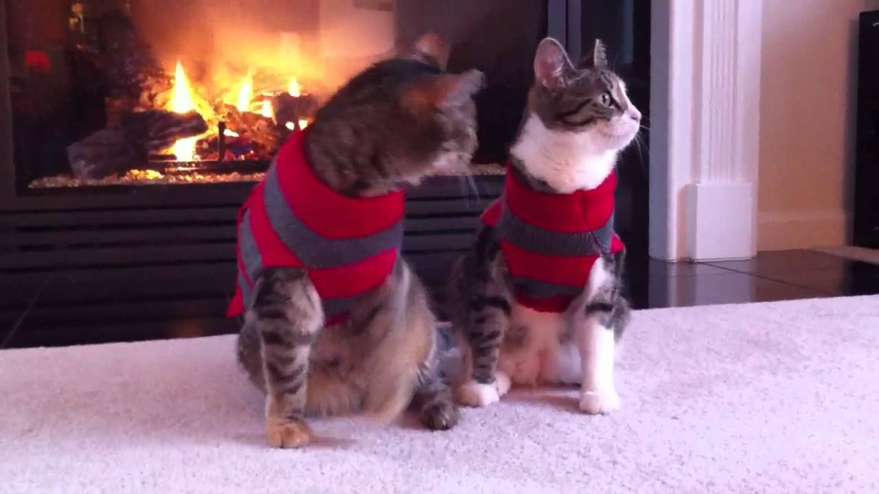 Cute cats in Christmas sweaters - YouTube