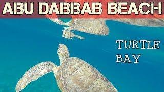 Snorkeling with turtles in Abbu Dabbab Turtle Bay- Egypt 2018