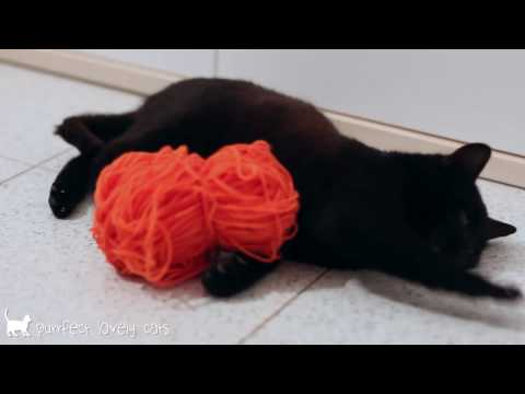 Funny cats videos    Black cat playing with orange ball of wool