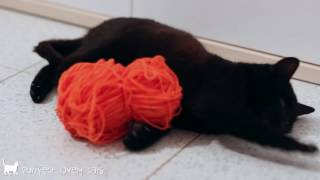 #FunnyCatsVideos || Black cat playing with orange ball of wool