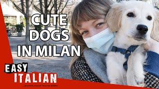 Cute Dogs in Milan | Easy Italian 68