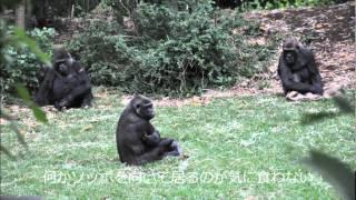 メルボルン動物園.wmv