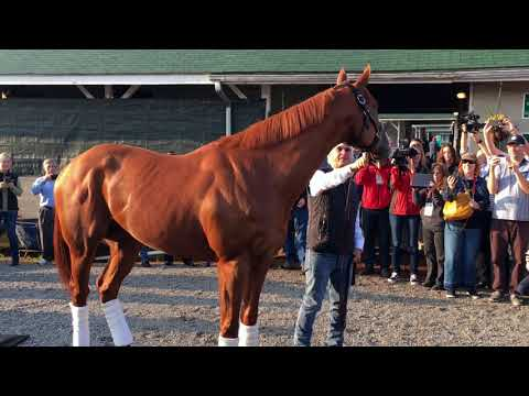 Kentucky Derby 2018 Justify - morning after Derby, on to Preakness