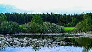 ПРИРОДА БЕЛАРУСИ .Велопокатушка по лесам полям Беларуси . Водоемы .Весна 2020г
